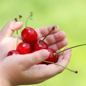 Польза и вред черешни, химический состав, калорийность черешни, применение в косметологии