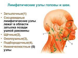 Почему при обветривании и простуде начинают болеть лимфоузлы?