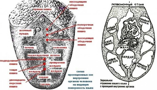 Географический язык: причины возникновения у взрослого и ребенка, лечение